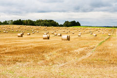 Beautiful countryside landscape. Round straw bales in fields Stock Images