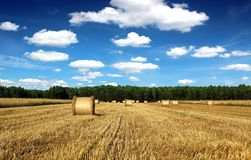 Beautiful countryside landscape sheaves and field. With blue sky Royalty Free Stock Images