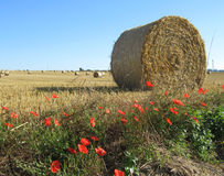 Beautiful Countryside Normandy. A typical view of hay rolls and poppies, a classic view of the icons of the norman landscape, just outside the town of Trun Stock Photography