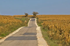 Beautiful countryside road through cornfields. Beautiful countryside road through golden cornfields under blue sky Stock Images