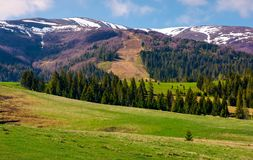 Beautiful countryside with snow on mountain top. Lovely mountainous landscape with spruce forest in springtime Stock Images