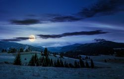 Beautiful countryside summer landscape at night. In full moon light. spruce trees on a rolling grassy hills at the foot of Borzhava mountain ridge. Fine weather Royalty Free Stock Photos