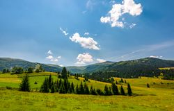 Beautiful countryside summer landscape. Spruce trees on a rolling grassy hills at the foot of Borzhava mountain ridge. Fine weather with some clouds on a blue Stock Photo