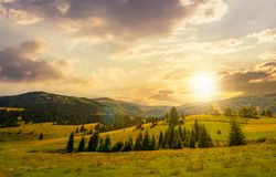 Beautiful countryside summer landscape at sunset. Spruce trees on a rolling grassy hills at the foot of Borzhava mountain ridge. Fine weather with some clouds Stock Photos