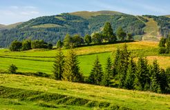 Beautiful countryside with trees on hillside Royalty Free Stock Images