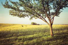 Beautiful countryside view Royalty Free Stock Photography