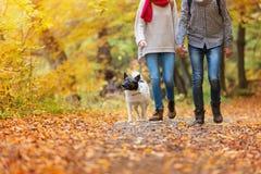 Beautiful couple in autumn nature Stock Photos