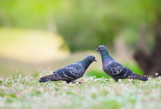 Beautiful couple bird Stock Image