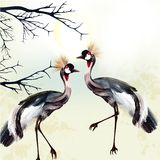 Beautiful couple of  birds Royalty Free Stock Photo