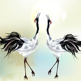 Beautiful couple of  birds Royalty Free Stock Images