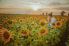 Beautiful couple having fun in sunflowers fields Stock Images