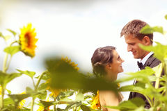 Beautiful couple having fun in sunflowers Stock Photos