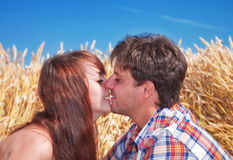 Beautiful couple kissing in wheat field. A beautiful couple sitting and kissing in wheat field Royalty Free Stock Image