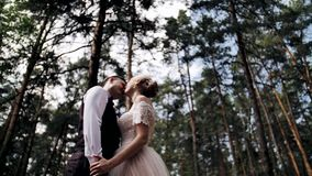 Beautiful couple in love in a stunning pine forest. The girl gently holds her boyfriend`s hands and presses her face to him. stock footage