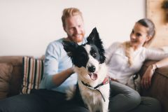 Beautiful couple relaxing at home and loving their dog Royalty Free Stock Photo