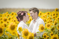 Beautiful couple in a sunflower field Stock Photos