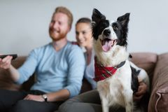 Beautiful couple watching television at home with their dog royalty free stock image
