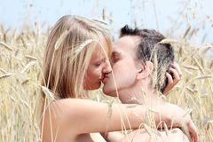 A beautiful couple in wheat field Stock Photos