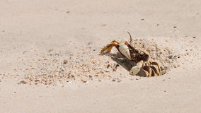 The beautiful crab stock image
