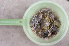 Beautiful crabs. Live beautiful crabs  in  plastic bowl Stock Photo