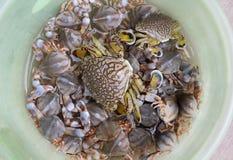 Beautiful crabs. Live beautiful crabs  in  plastic bowl Stock Photos
