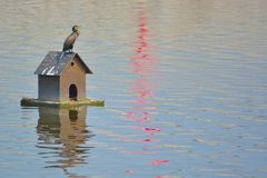 Beautiful crane sits quietly on his bird house Royalty Free Stock Photo
