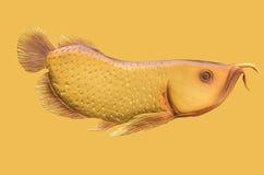 Beautiful craven awarona fish Stock Image
