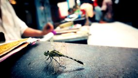 Beautiful creature Dragon Fly with black desk stock images