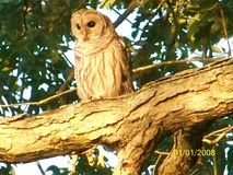 Beautiful  creature  in our tree. Loving the nature Stock Image