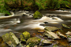 Beautiful creek of Clare Glens. Co. Clare, Ireland Stock Image