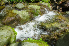Beautiful creek flowing inside of a green forest with stones in river at Mindo Royalty Free Stock Photo