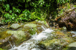 Beautiful creek flowing inside of a green forest with stones in river at Mindo Stock Photography