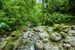 Beautiful creek flowing inside of a green forest with stones in river at Mindo Stock Photos