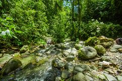 Beautiful creek flowing inside of a green forest with stones in river at Mindo Stock Photo