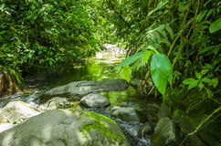 Beautiful creek flowing inside of a green forest with stones in river at Mindo Stock Image