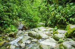 Beautiful creek flowing inside of a green forest with stones in river at Mindo Royalty Free Stock Photos
