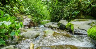 Beautiful creek flowing inside of a green forest with stones in river at Mindo Royalty Free Stock Photography