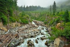 Beautiful creek in Mount Rainier and log jam Royalty Free Stock Photos