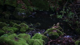 Beautiful creek in the rain with stones covered with green moss stock video