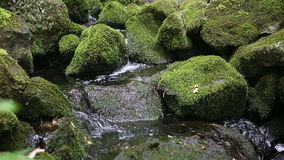 Beautiful creek with stones covered with green moss stock video