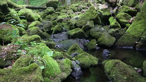 Beautiful creek with stones covered with green moss. Beautiful creek with stones covered with moss stock footage