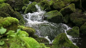 Beautiful creek with stones covered with green moss stock video footage