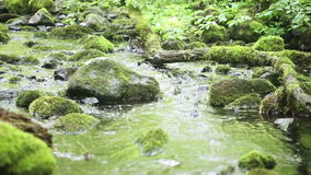 Beautiful creek with stones with green moss. Beautiful creek with stones covered with green moss stock video footage