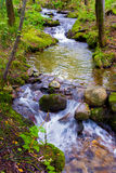 Beautiful creek in a wild forest Royalty Free Stock Images