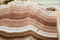 Beautiful cristals, minerals and stones Stock Image