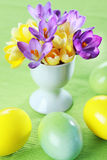 Beautiful Crocuses for Easter Royalty Free Stock Images
