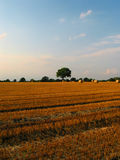 Beautiful crop-field (middled). Landscape of european crop-field with place for text Royalty Free Stock Photo