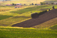 Beautiful crop field plantations in Oyacachi Stock Image