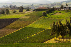 Beautiful crop field plantations in Oyacachi Royalty Free Stock Images
