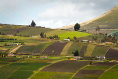 Beautiful crop field plantations in Oyacachi Stock Photos